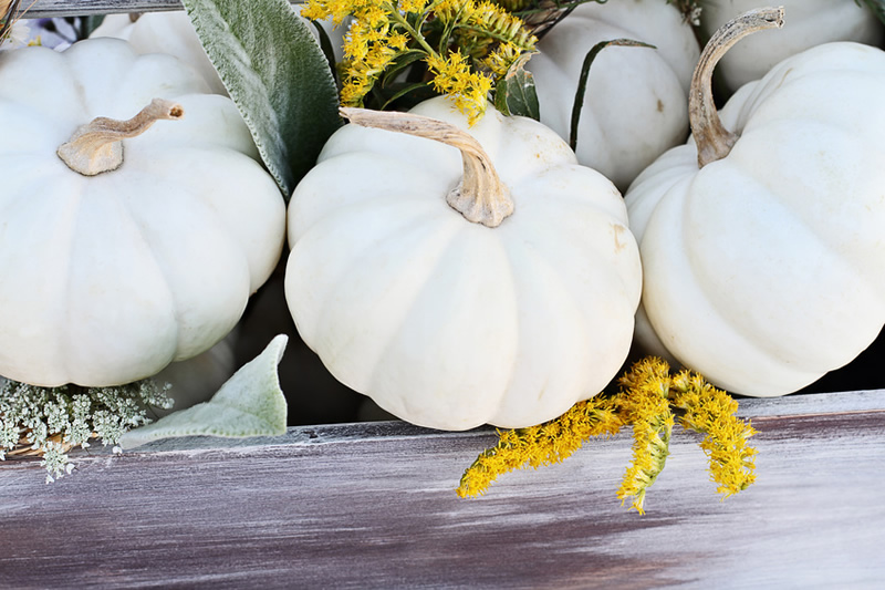 How to Transition Your Home from Summer to Fall with Decor
