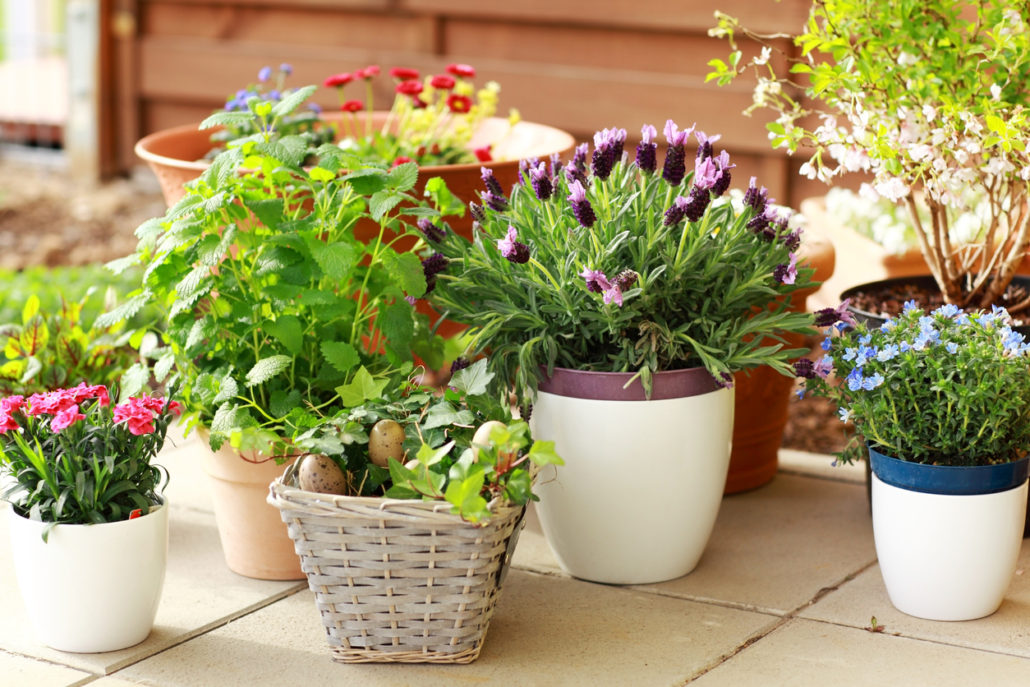 5 Container Garden Design Ideas